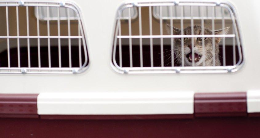 Prevoz ljubimaca u kargo delu aviona - mačka