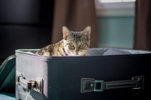 Mačka u koferu - putovanje kućnih ljubimaca avionom